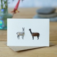 Mini Alpacas card