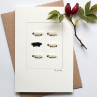 Sheep black of the family card