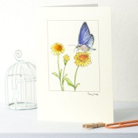 Orange-tipped Butterfly card