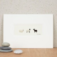 3 Rare breed sheep print