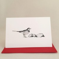 Pied Wagtail Gift Card