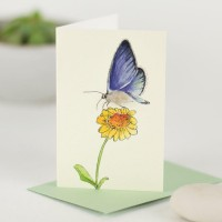 Mini Butterfly blue card