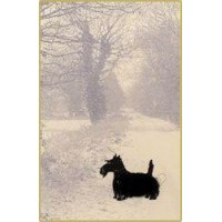 Mini CW12 - Scottie on a snowy lane