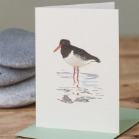 Mini Bird Oyster catcher card
