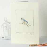 Bluejay card