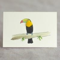 Mini Bird Toucan card